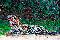 09 Flyertext Pantanal 200